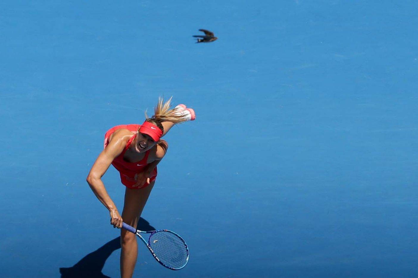 Sharapova recibe wild card para jugar el US Open