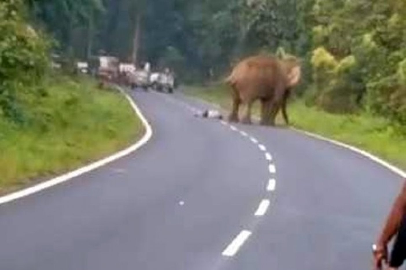 Elefante mató a un hombre que quiso sacarle una foto — Video impactante
